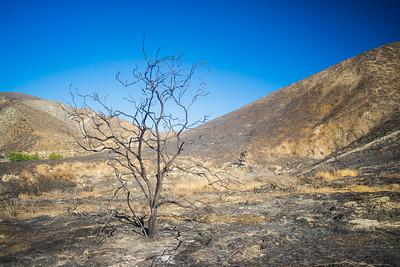 Scraggly Dead Tree in Wilderness