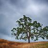 Oak Tree on a Ridge