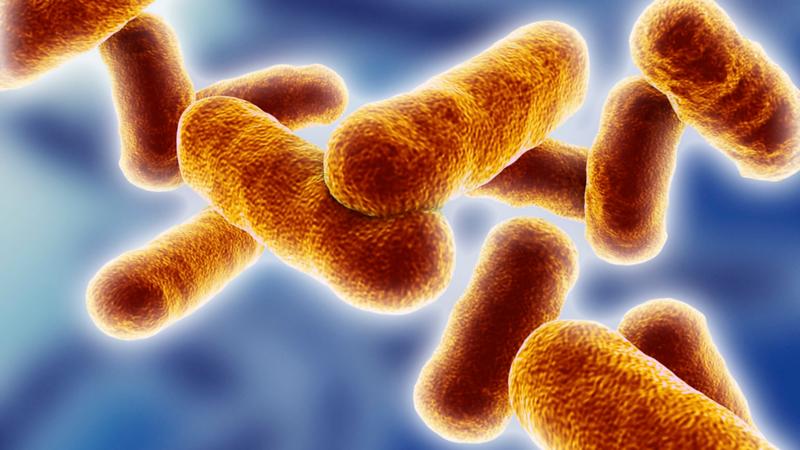Benefits of Probiotics - gut bateria02 L