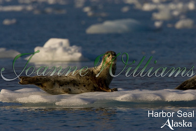 lake; water; alaska; ice; snow; harbor; seal;