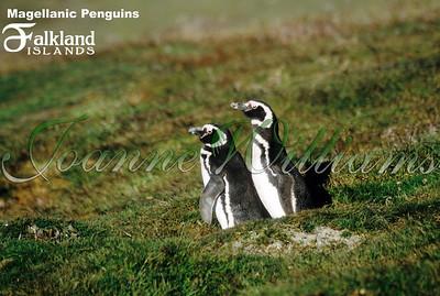 Falkland Islands (all of them)