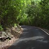 0084 tree lined one way road , st john, united states virgin islands