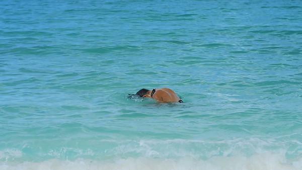 0007 young bikini woman flipping hair in tropical water in the Caribbean