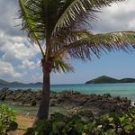 031 palm tree shoreline at Sapphire Beach, St Thomas