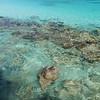 panning tropical beach and coral reef, little hawksnest, st john