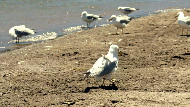 Following Seagull From Lake to Shore