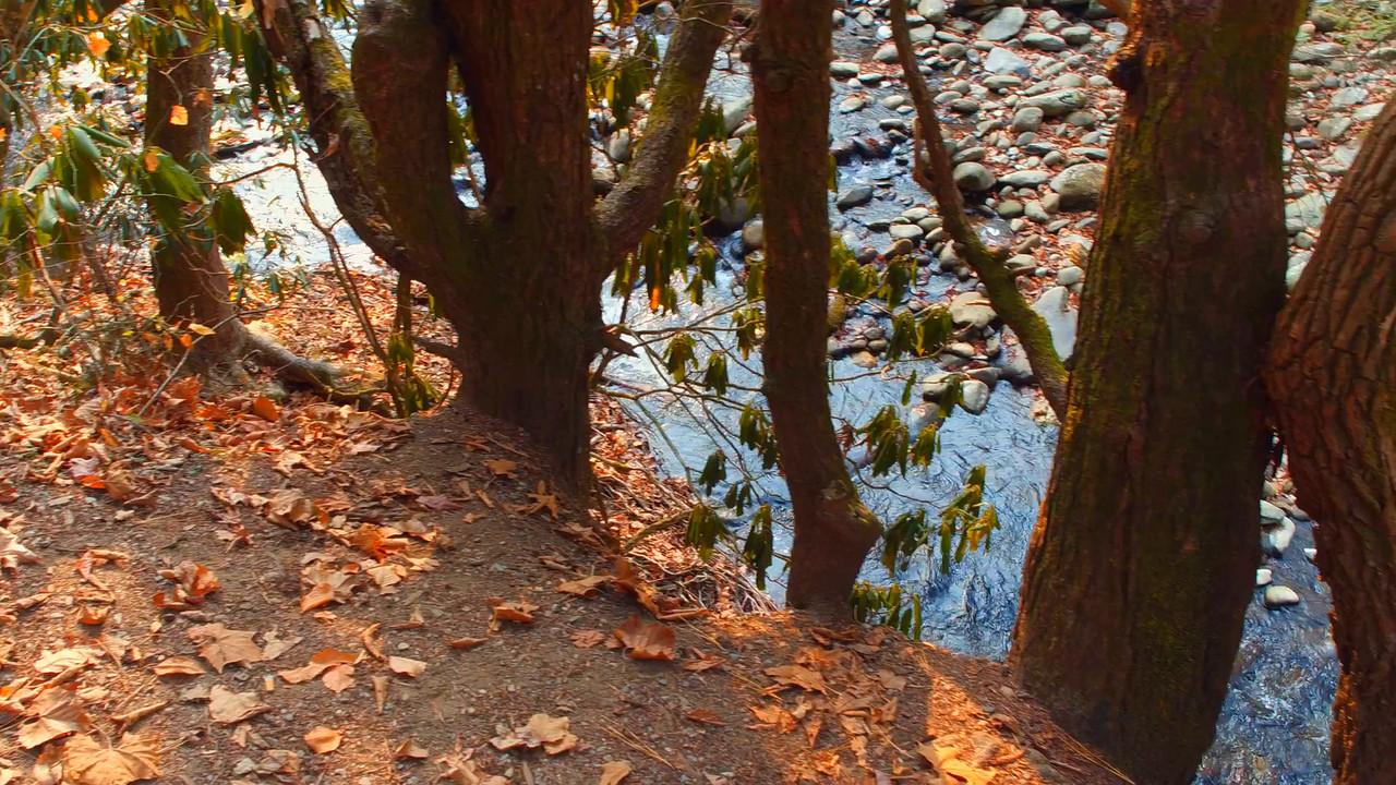 Nature scene at the Appalachian Trail Smokey Mountains