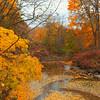 Foliage landscape stock video