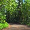Stock video Manoa Falls Trail
