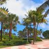 Miami Beach palm trees and condominiums