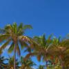 Movie footage Miami Palms