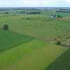 Aerial video cows grazing in a field