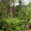 Manoa Falls Trail Honolulu Hawaii