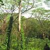 Manoa Falls Trail Hawaii 4k