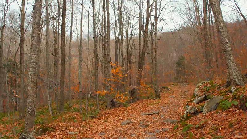 Hyperlapse walking through the woods