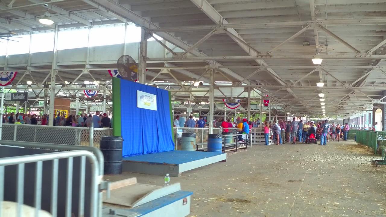 Sheep show at the Iowa State Fair