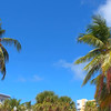 Stock footage of palm trees