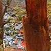 Nature scene Gatlinburg Tennessee