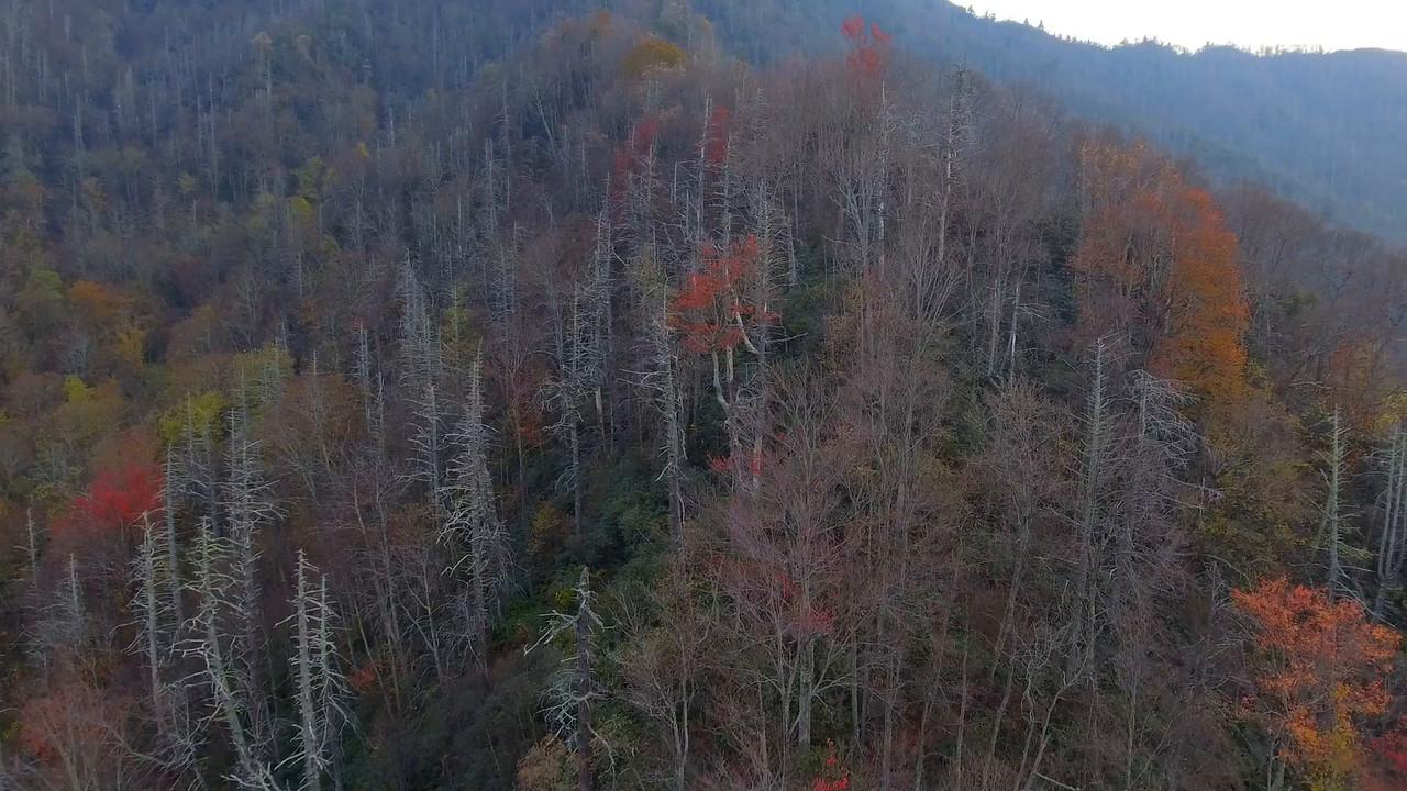 American Smokey Mountains aerial video