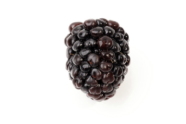 isolated blackberry on a white background