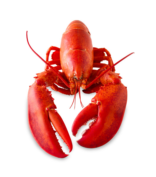 Red lobster isolated on a white background with added shade. Clipping path in the file.