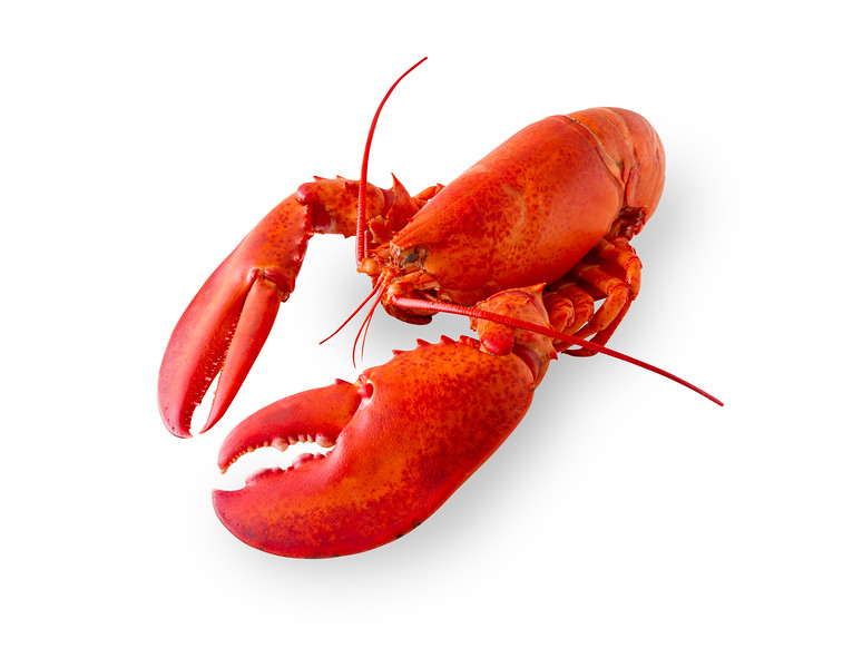 Cooked and boiled red lobster isolated on a white background with added shade. Clipping path in the file.