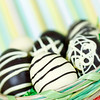 homemade easter eggs in a basket. Dark and white chocolate. Green lined background with very shallow depth of field.