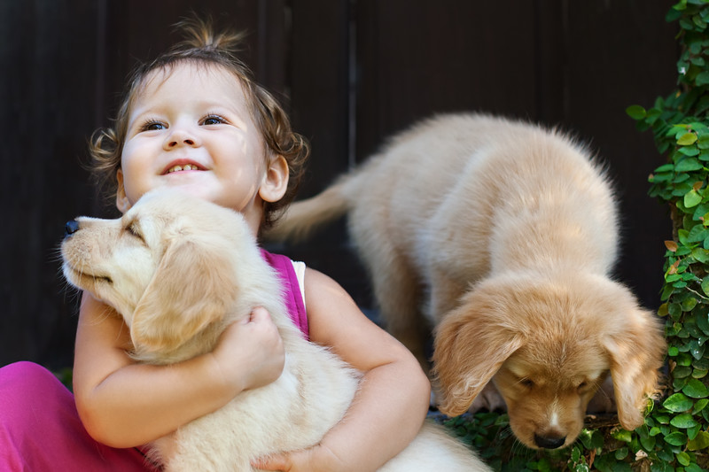 Funny photo of happy baby girl hug beautiful golden labrador retriever puppy play together. Family lifestyle training dogs. Positive emotions of children fun games with home pet on summer vacation.
