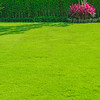 Green lawn, the front lawn for background.