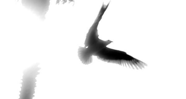 fling bird-2