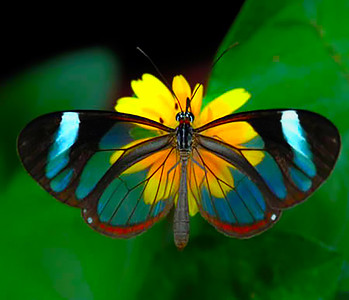 a357_Butterfly