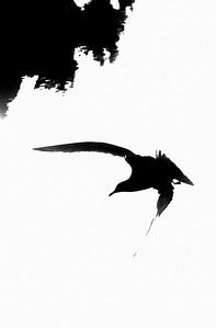 flying bird-10