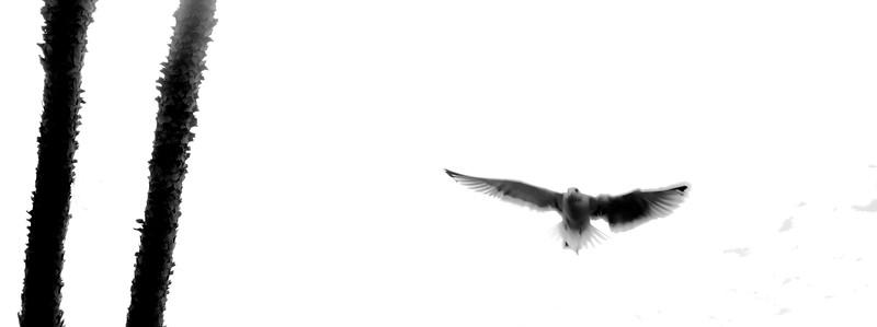 fling bird-5
