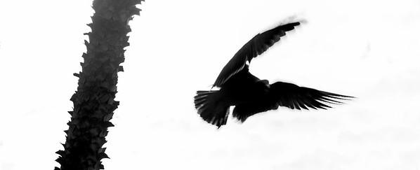 flying bird-16