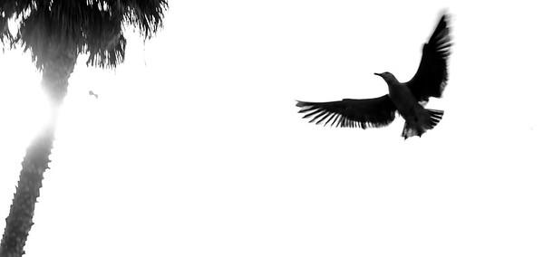 flying bird-11