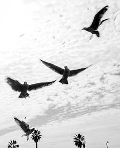 f;ying bird-14