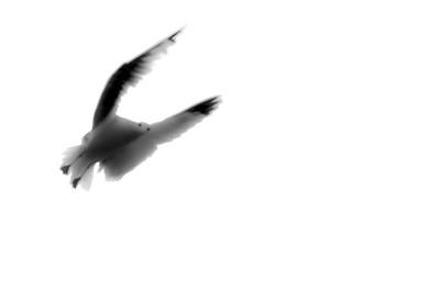 flying bird-3