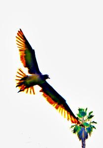 flying bird-1