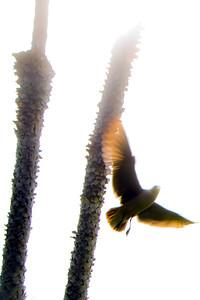 flying bird-9
