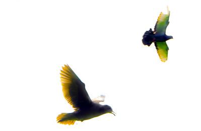 flying bird-4