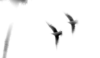 fling bird-6
