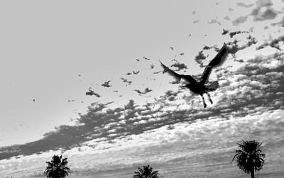 flying bird-12