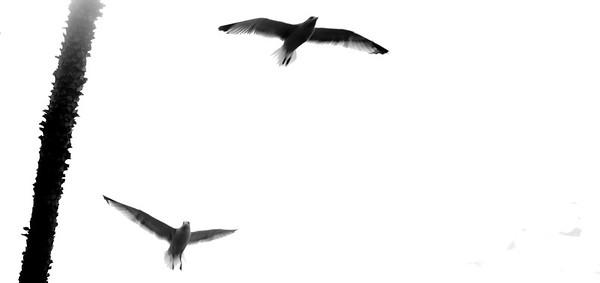 flying bird-7