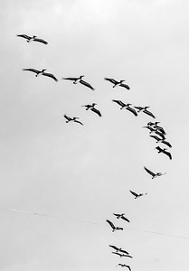 birds flying-2