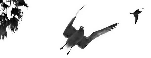 flying bird-8