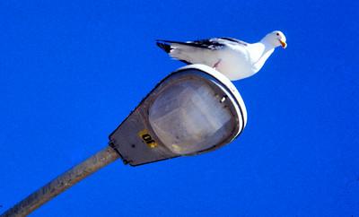 bird on the lamp