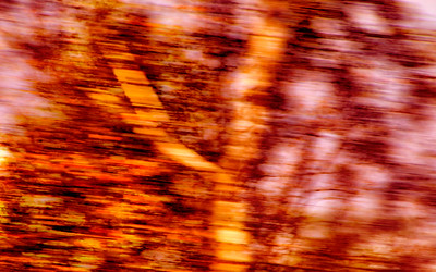 abstract tree-6