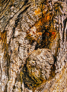abstract tree-