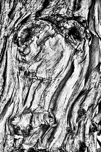 abstract tree-34
