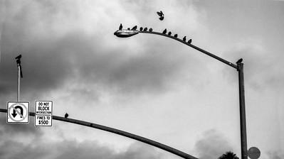 birds on the lamp